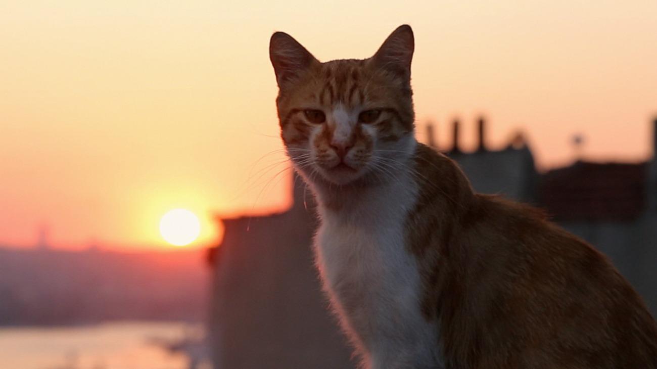 Kedi backdrop