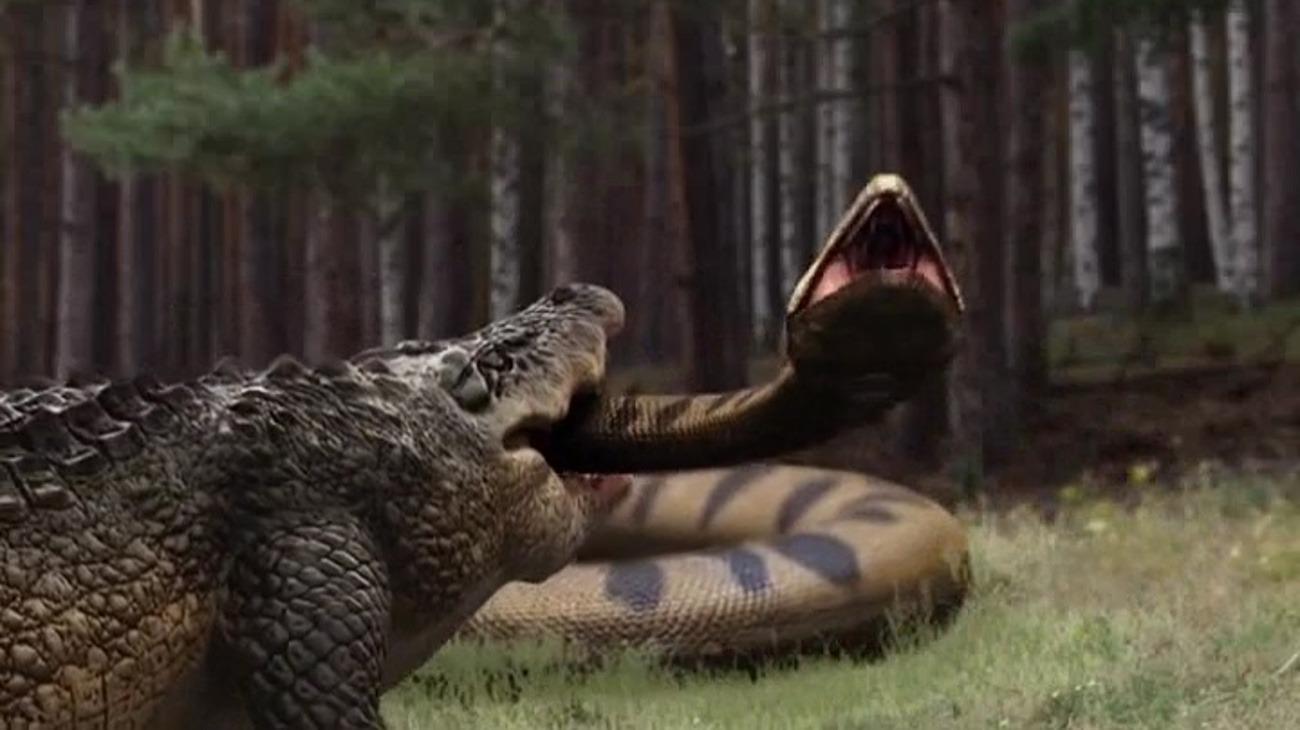 Lake Placid vs. Anaconda backdrop