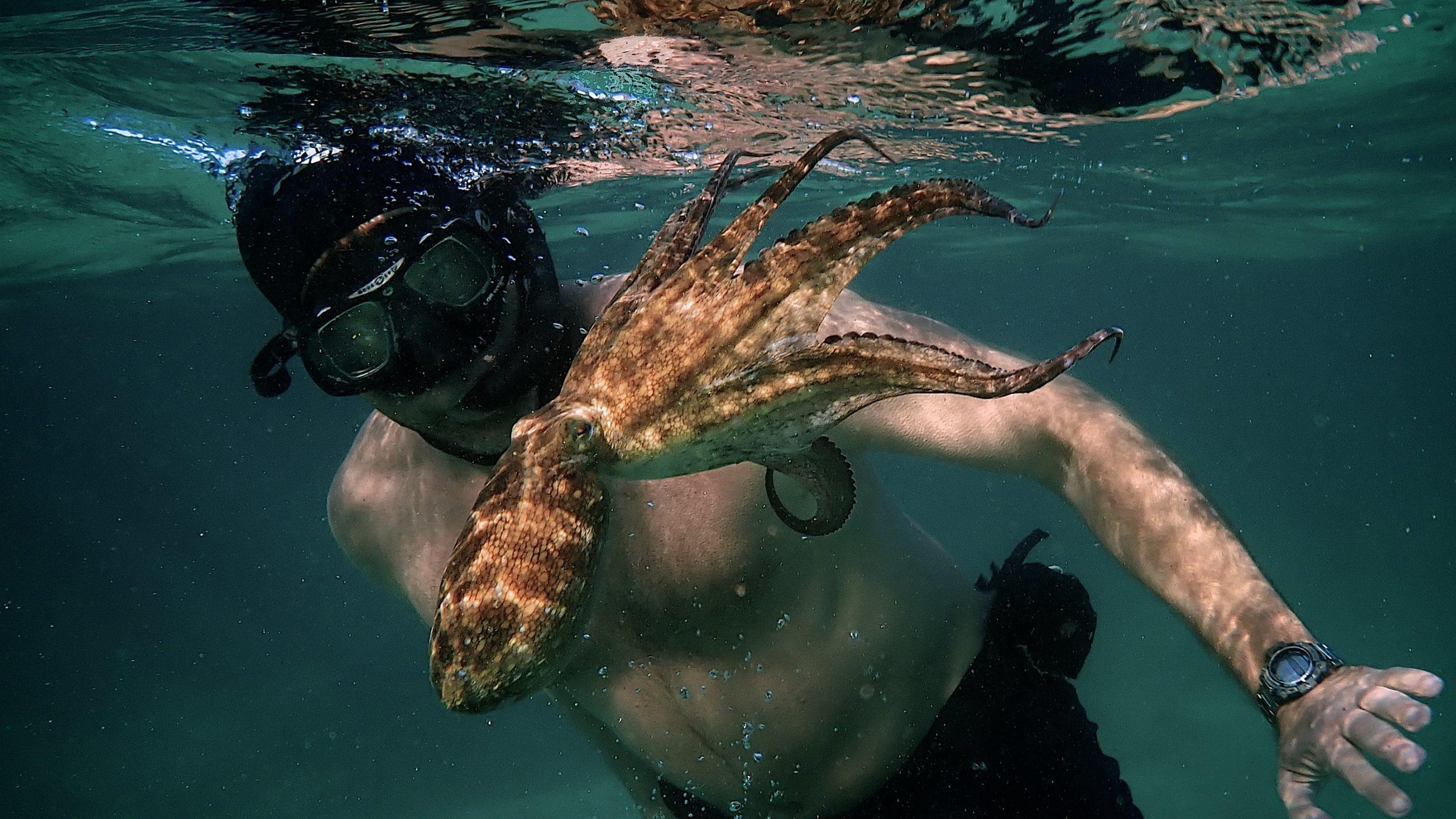 My Octopus Teacher backdrop
